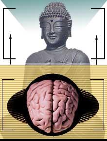 brain-bud